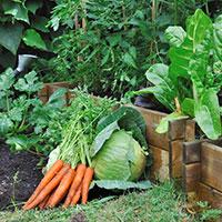 légumes frais au sol