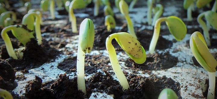 plants 1331667