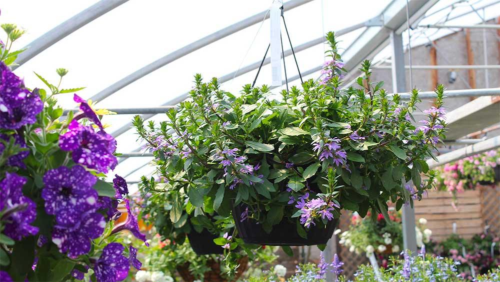 confection4 jardiniere jardin pro 1