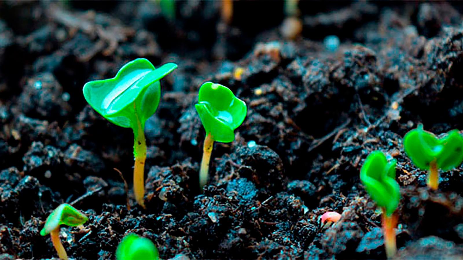 semis conseilhorticole jardinpro