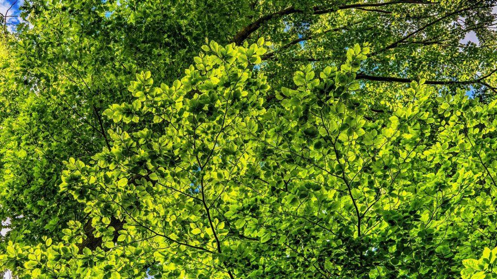 feuillage planter arbre jardinpro