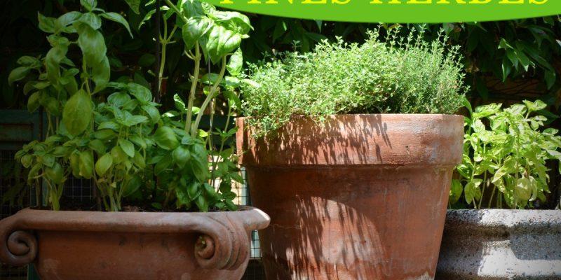 tirage fines herbes 2