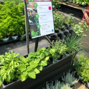 Kit fines herbes Jardin Pro