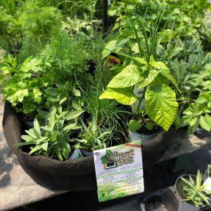 Kit papilles avec rabais Smart Pot et plants de Jardin Pro
