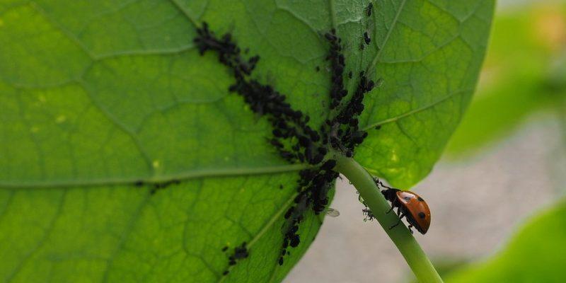 photochronique jpro juillet insectsbenefiques