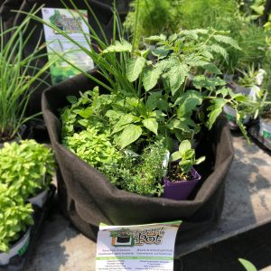 Kit salade grecque jardin Pro