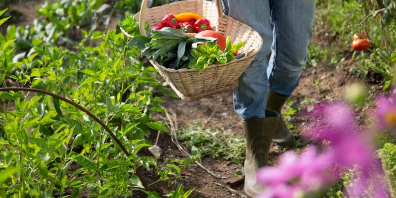 jardin pro permaculture 1