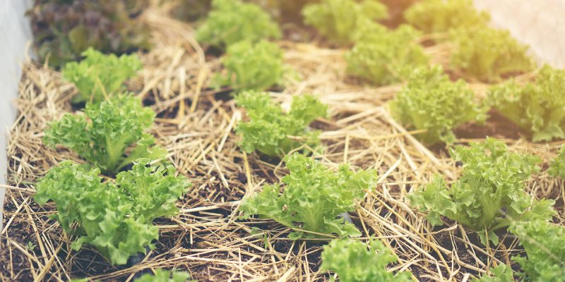 potager permaculture jardin pro