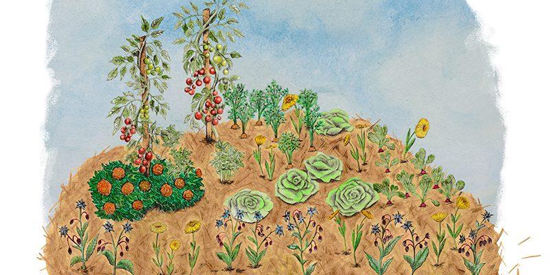 jardin pro permaculture potager