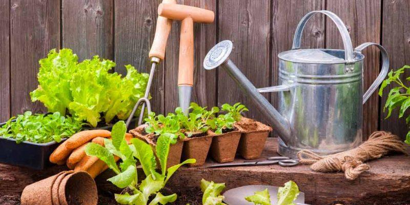 salade au jardin